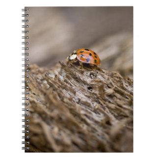 Ladybug on old wood, Apalachicola Bluffs and Notebook