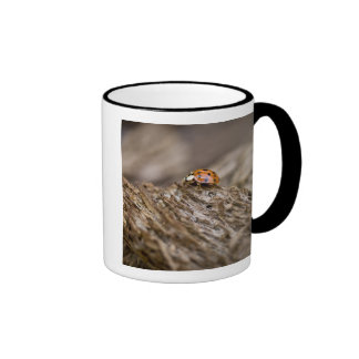 Ladybug on old wood, Apalachicola Bluffs and Ringer Mug
