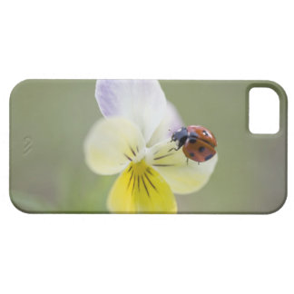 Ladybug on pansy, Biei, Hokkaido, Japan Case For The iPhone 5