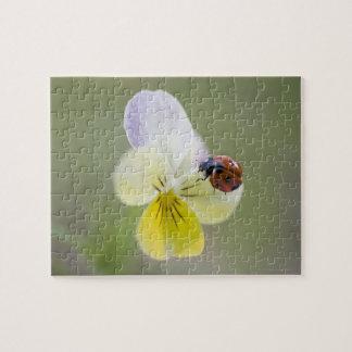 Ladybug on pansy, Biei, Hokkaido, Japan Jigsaw Puzzle
