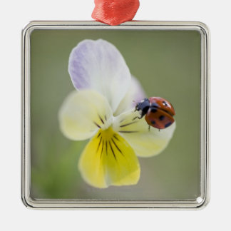 Ladybug on pansy, Biei, Hokkaido, Japan Silver-Colored Square Decoration
