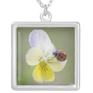 Ladybug on pansy, Biei, Hokkaido, Japan Silver Plated Necklace