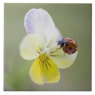 Ladybug on pansy, Biei, Hokkaido, Japan Tile