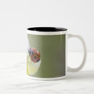 Ladybug on pansy, Biei, Hokkaido, Japan Two-Tone Coffee Mug