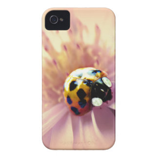 Ladybug on Pink Daisy iPhone 4 Covers