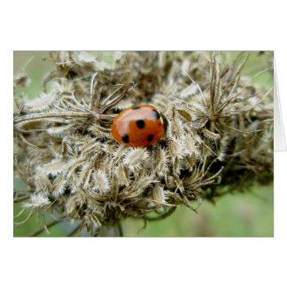 Ladybug on Queen Anne's Lace Note Card