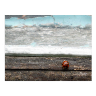 Ladybug on Rustic wood window Postcard