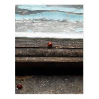 Ladybug on Rustic wood window Post Cards