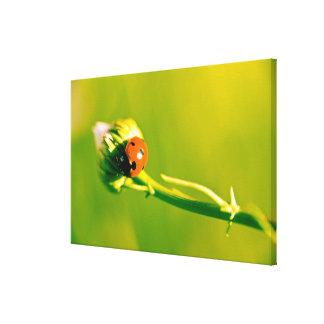 Ladybug on sprig canvas print