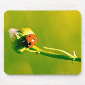 Ladybug on sprig mouse mat