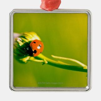Ladybug on sprig Silver-Colored square decoration