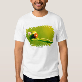 Ladybug on sprig t-shirts