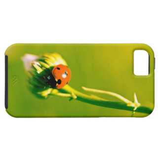 Ladybug on sprig tough iPhone 5 case