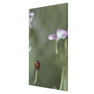 Ladybug on Stem Canvas Print