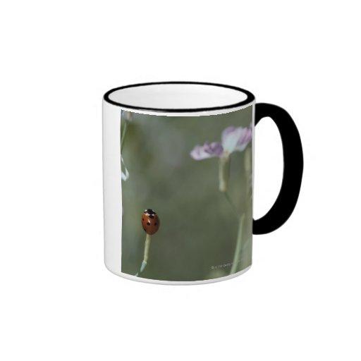 Ladybug on Stem Mug