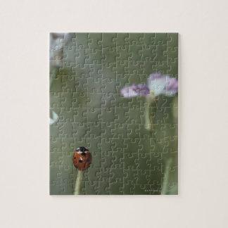Ladybug on Stem Puzzles