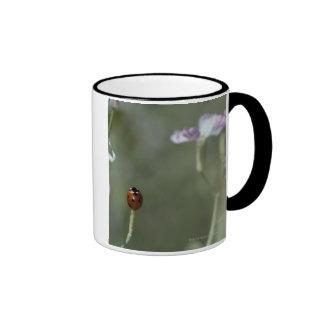 Ladybug on Stem Ringer Mug