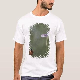 Ladybug on Stem T-Shirt