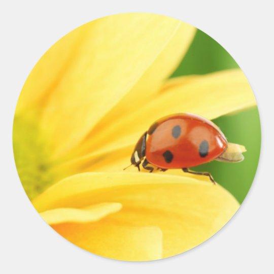 Ladybug on sunflower classic round sticker
