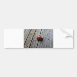 Ladybug on the boards summer day car bumper sticker