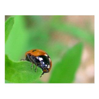 Ladybug on the edge postcard