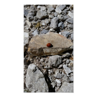 Ladybug on the rocks poster