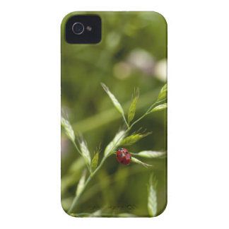 Ladybug on Wild Grass iPhone 4 Covers