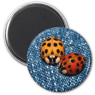 Ladybug Pair 6 Cm Round Magnet