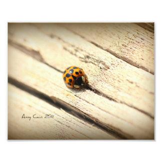 Ladybug Photo Print