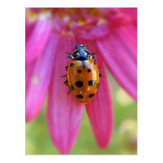 Ladybug Postcard