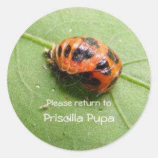 Ladybug Pupa Bookplate sticker