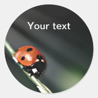 Ladybug round stickers