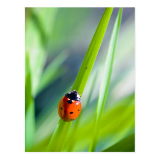 LadyBug s Journey Postcard