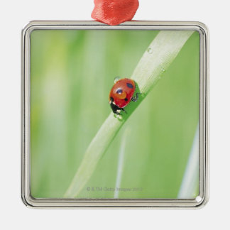 Ladybug Silver-Colored Square Decoration
