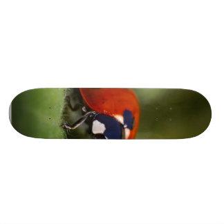 Ladybug Custom Skate Board