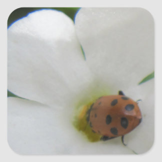Ladybug Square Sticker