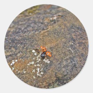 Ladybug Stickers Round Sticker