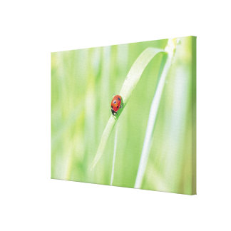 Ladybug Stretched Canvas Prints