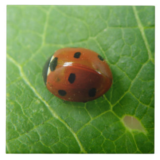 Ladybug Tile