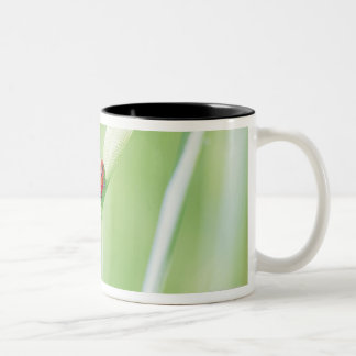 Ladybug Two-Tone Coffee Mug