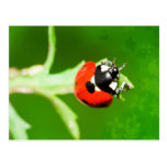 Ladybug with green leaves postcard