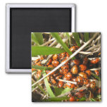 Ladybugs (Coccinellidae) Square Magnet