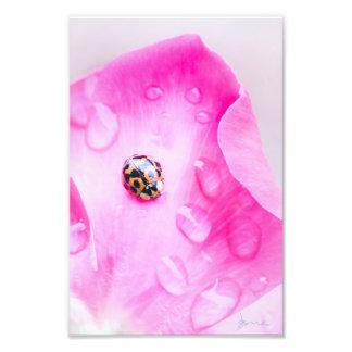 ladybugs life photo print