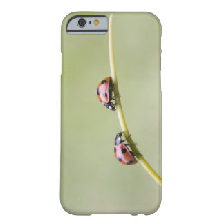 Ladybugs on stem, Biei, Hokkaido, Japan Barely There iPhone 6 Case
