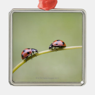 Ladybugs on stem, Biei, Hokkaido, Japan Christmas Ornament