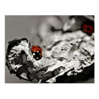 Ladybugs Postcards