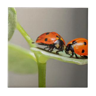 ladybugs small square tile