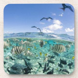 Lagoon safari trip featuring Stingrays Beverage Coasters