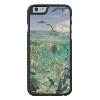 Lagoon safari trip featuring Stingrays Carved® Maple iPhone 6 Case