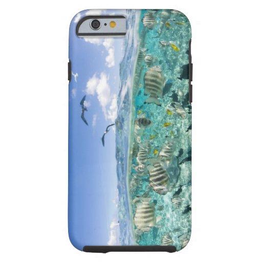 Lagoon safari trip featuring Stingrays iPhone 6 Case